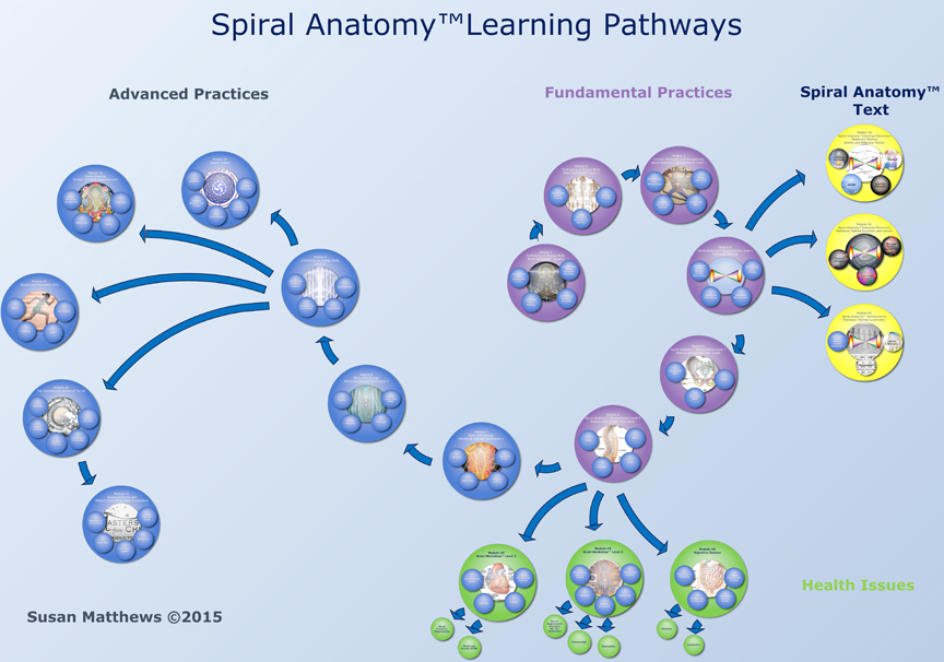 Spiral Anatomy Training