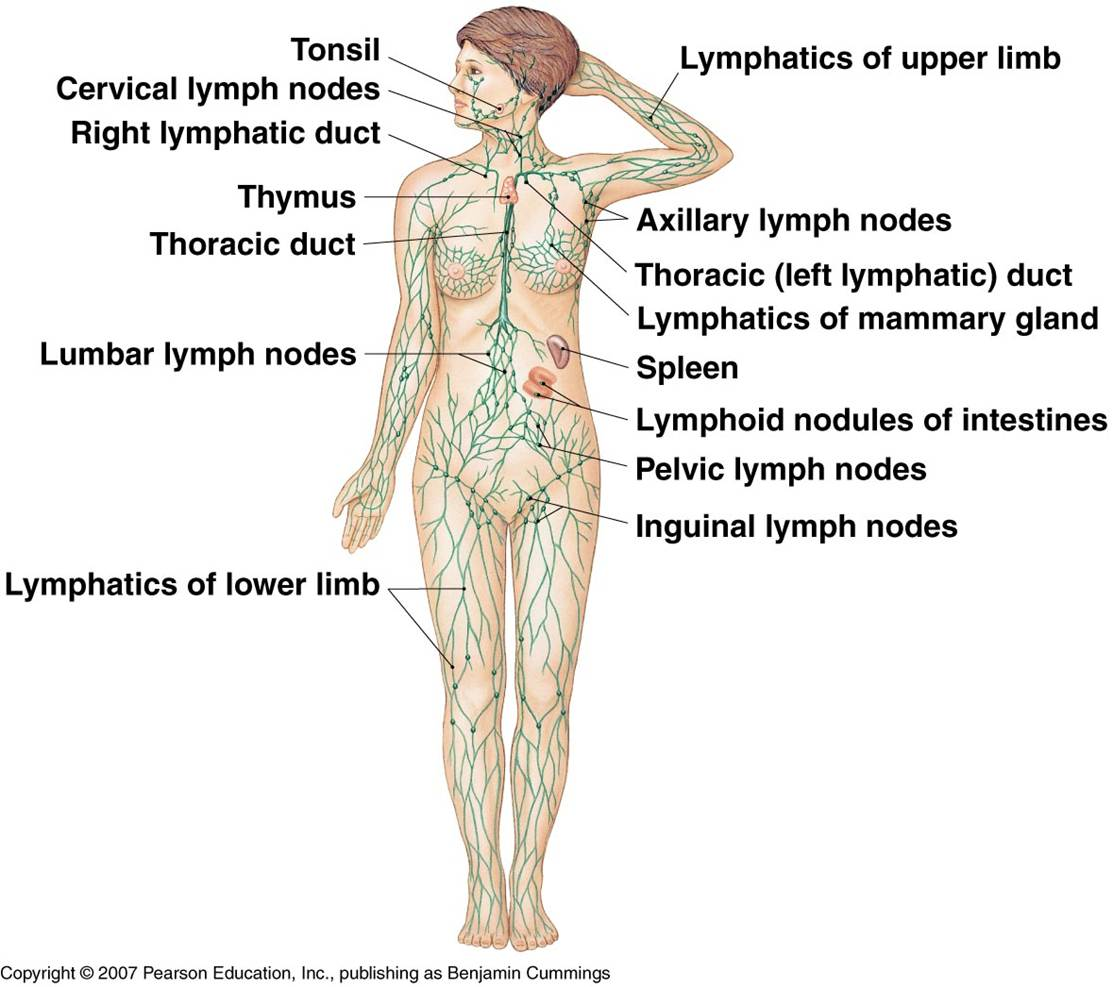 11 Ways to Boost Your Lymphatic System for Great Health